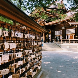 Tokio, co zwiedzać? Świątynia Meiji jingu, Yoyogi Park