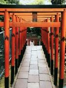 Tokio, co zwiedzać? Czerwony tori - bramy